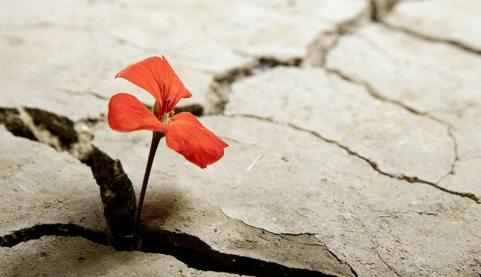 resilienza-mindfulness